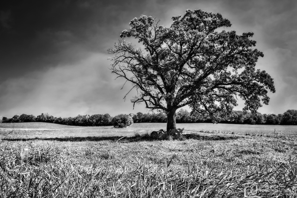 Lone Oak tree near Retzer Nature Center.