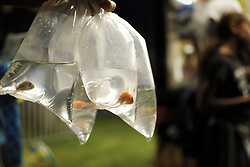 Fish in plastic bags, won at a game booth, are held by a funfair attendee at a small community carnaval, in Wyndmoor, PA, just outside Philadelphia, on June 8, 2018.