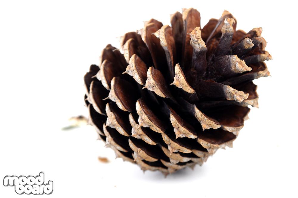 Cone on white background - studio shot