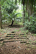 El Parque nacional Camino de Cruces es un parque nacional situado a 15 km al norte de la ciudad de Panam&aacute;, en la provincia de Panam&aacute;, en el pa&iacute;s hom&oacute;nimo. Fue creado en 1992 con el fin de conservar los ecosistemas y las especies de los bosques tropicales<br /> <br /> Cuenta con una superficie de 4.000 hect&aacute;reas en forma que corredor. Se trata de un corredor que conserva tramos del antiguo camino de la &eacute;poca de dominaci&oacute;n espa&ntilde;ola, Camino Real, que un&iacute;a los n&uacute;cleos de poblaci&oacute;n de Panam&aacute; y Nombre de Dios. Hoy sirve de uni&oacute;n entre los parques nacionales de Soberan&iacute;a y Metropolitano.<br /> <br /> El clima es tropical lluvioso, con vientos caribe&ntilde;os, y la vegetaci&oacute;n es, por consiguiente abundante. Cabe destacar el roble y las especies arbustivas, epifitas, helechos arborescentes y carrizales, adem&aacute;s de ejemplares de cedro dulce, cipresillo, jaul, roble blanco, roble encino y tirr&aacute;.<br /> <br /> La fauna es tambi&eacute;n variada y abundante, cabe destacar los reptiles como la iguana verde, serpiente verrugosa, bejuco, v&iacute;boras y caim&aacute;n, aves como el guacamayo, loro, guichiche, gavil&aacute;n y visitaflores o insectos, en especial las mariposas y monos, como el tit&iacute;.<br /> <br /> &copy;Alejandro Balaguer/Fundaci&oacute;n Albatros Media.
