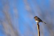 Wildlife photography from Patagonia Lake State Park, Arizona, USA