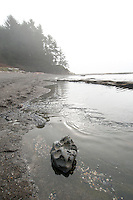 Botanical Beach Provincial Park near Port Renfrew, BC, is known for its intertidal zone and crystal clear tide pools and features geological marvels, such as its ridges of shale and quartz that marble through the black basalt.