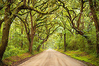 The beautiful Botany Bay Road on Edisto Island in South Carolina.