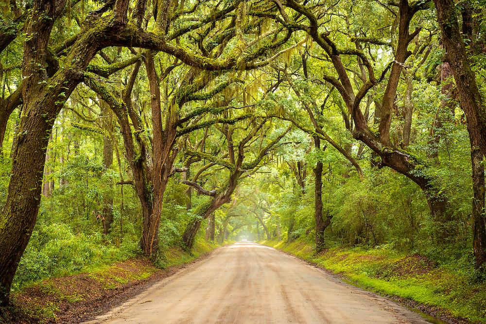 The beautiful Botany Bay Road on Edisto Island in South Carolina.