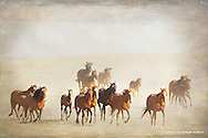 Wild Horses<br /> Cheyenne River Sioux Reservation,<br /> South Dakota<br /> <br /> WILD HORSES<br /> ...an american romance<br /> <br /> Descended from the mounts of the Conquistadors, shaped by a vanishing frontier, wild horses have been renegades<br /> for centuries, becoming romantic symbols of freedom.<br /> <br /> ...from PBS&rsquo;s Wild Horses: An American Romance<br /> <br /> <br /> Edition of 25
