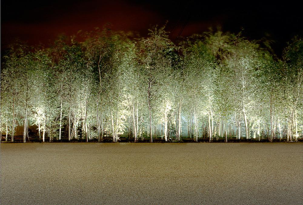 tate modern trees london
