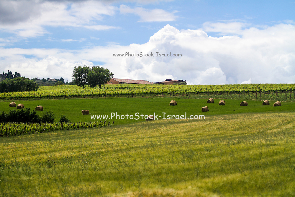 Rolling green hills with trees Photographed in Tuscany, Italy