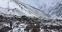 Woman trekking along a path in the snow, Langtang National Park, Nepal