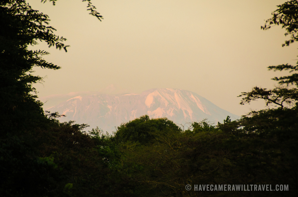 The summit (Kibo Summit) of Mt Kilimanjaro seen from the distance below, with its snow and catching the golden rays of the late afternoon sun.