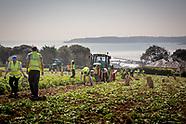 Farming stock