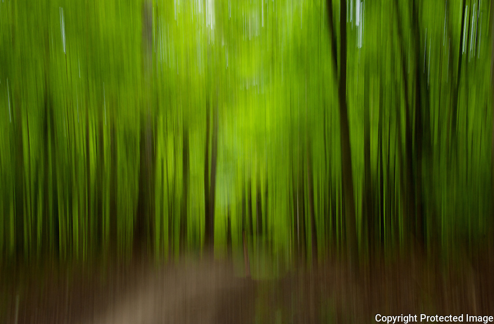 Forest blurred