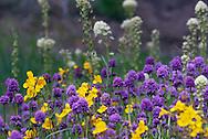 Coastal Flowers - Washington Park, Anacortes, Washington