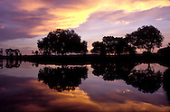 Live Oaks reflection in lake at sunrise, Sarsota, Florida