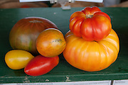 """The dark green tomato is called the """"Paul Robeson"""", grown at Verrill Farm in Concord, MA USA"""