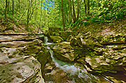 Deciduous forest surrounding Louth Falls in spring<br />