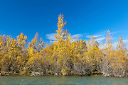 Clutha River, fall colors, New Zealand