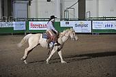 Stock Horse Challenge