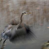 Birds : Alight