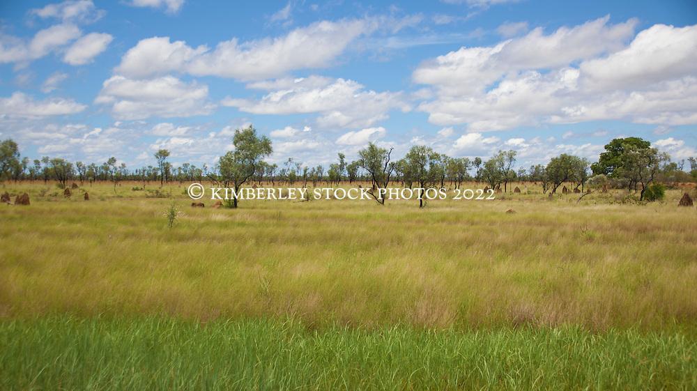 Lush grasslands near Fitzroy Crossing in the wet season.