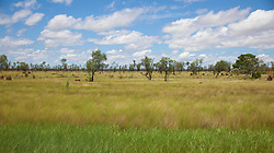Lush grasslands near Fitzroy Crossing in the wet season.
