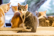 Sunshine and her litter of six colorful kittens are up for adoption through Feline Rescue.