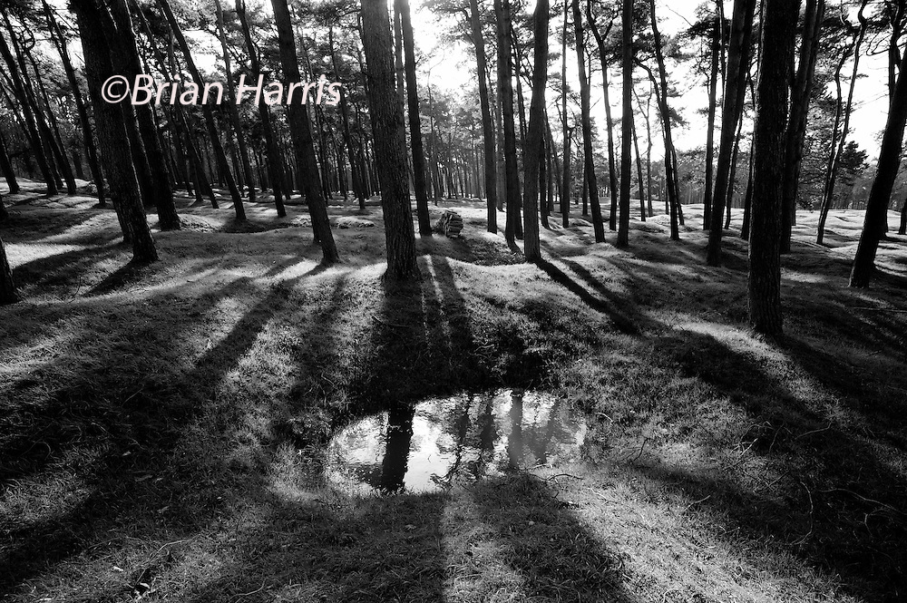 Vimy Ridge WW1 Canadian National Memorial and Battlefield, Vimy, France. February 2014<br /> The shell craters have survived nearly 100 years and much of the protected surrounding landscape still contains unexploded WW1 shells and ammunition. Walkers are warned not to stray from the prescibed pathways.<br /> <br /> The Battle of Vimy Ridge in the First World War 1914-1918 was a military engagement fought primarily as part of the Battle of Arras, in the Nord-Pas-de-Calais region of France, during the First World War. The main combatants were the Canadian Corps, of four divisions, against three divisions of the German Sixth Army. The battle, which took place from 9 to 12 April 1917, was part of the opening phase of the British-led Battle of Arras, a diversionary attack for the French Nivelle Offensive.<br /> <br /> The objective of the Canadian Corps was to take control of the German-held high ground along an escarpment at the northernmost end of the Arras Offensive. This would ensure that the southern flank could advance without suffering German enfilade fire. Supported by a creeping barrage, the Canadian Corps captured most of the ridge during the first day of the attack. The town of Th&eacute;lus fell during the second day of the attack, as did the crest of the ridge once the Canadian Corps overcame a salient of considerable German resistance. The final objective, a fortified knoll located outside the town of Givenchy-en-Gohelle, fell to the Canadian Corps on 12 April. The German forces then retreated to the Oppy&ndash;M&eacute;ricourt line.<br /> <br /> Historians attribute the success of the Canadian Corps in capturing the ridge to a mixture of technical and tactical innovation, meticulous planning, powerful artillery support and extensive training, as well as the failure of the German Sixth Army to properly apply the new German defensive doctrine. The battle was the first occasion when all four divisions of the Canadian Expeditionary Force participated in a battle together and thus became a Canadian nationalistic symbo