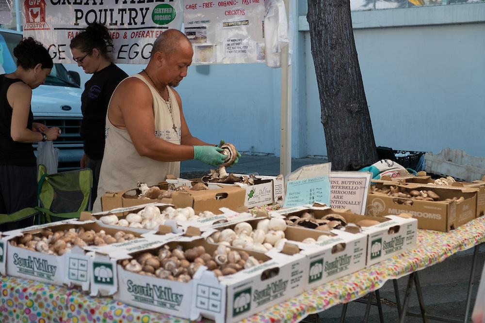 Mushrooms at the Farmers Market | June 30, 2013
