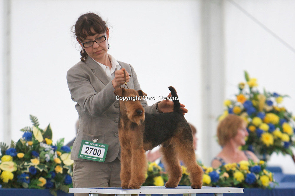 Saredon The Shining<br /> Mr D Scawthorn<br /> Welsh Terrier