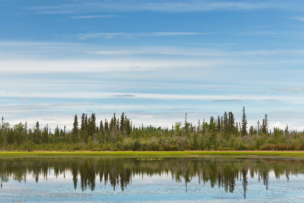 Spruce forest reflected in pond along the Taylor Highway in Interior Alaska. Summer. Afternoon.