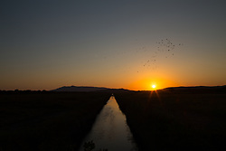 August 17, 2017 - Capalbio Scalo, Grosseto, Italy - The magical sunset atmosphere at Macchiatonda in the Maremma region of Tuscany, Italy, with nutrients, cormorants and swans inside the canals (Credit Image: © Matteo Nardone/Pacific Press via ZUMA Wire)