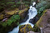 MT00139-00...MONTANA - Avalanch Creek in Glacier National Park.