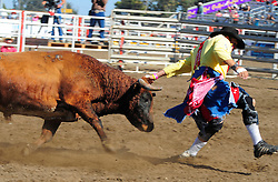 Freestyle bullfighter Andy Burelle, from Ardmore, Oklahoma leads a Mexican fighting bull by the horns at the 102nd California Rodeo Salinas, which opened July 19 for a four-day run.