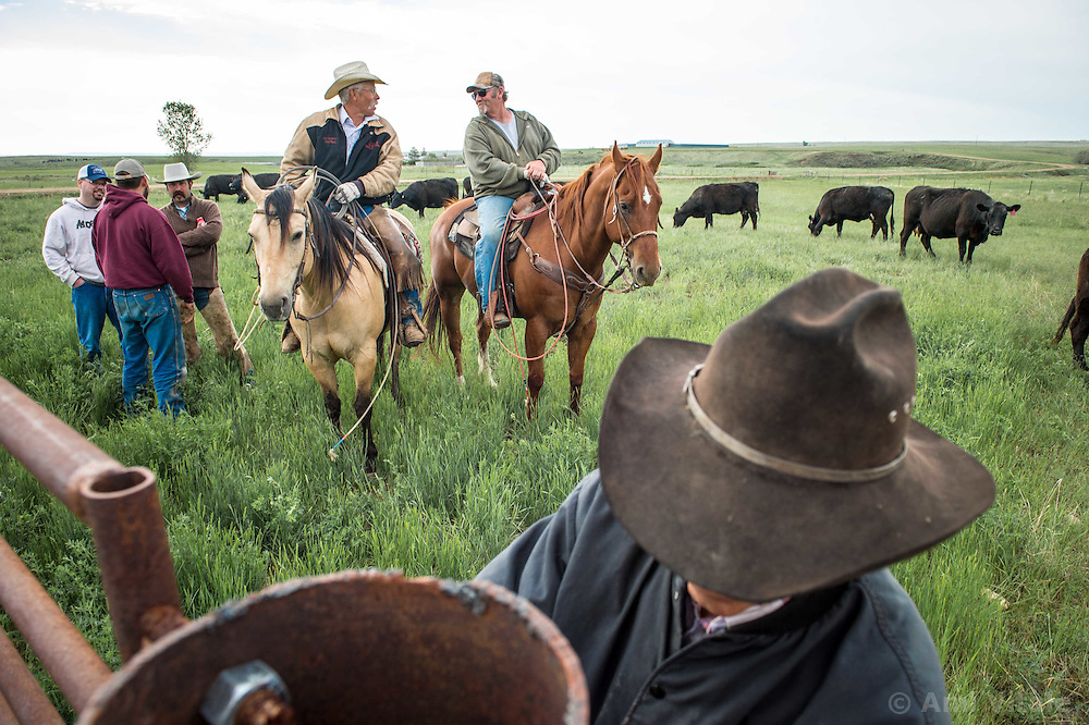 Greg Oxarart prepares for branding calves on the Oxarart Ranch near Malta, Montana on June 2, 2013. The Oxarart Ranch is part of an innovative grass bank project that allows ranchers to graze their cattle at discounted rates on Nature Conservancy land in exchange for improving conservation practices on their own &ldquo;home&rdquo; ranches. In 2002, the <br /> Conservancy began leasing parts of the ranch to neighboring ranchers who were suffering from several years of severe drought essentially offering the Matador&rsquo;s grass to neighboring ranches in exchange for their  participation in conservation efforts. Thirteen ranchers graze their cattle on the Matador and the grassbank has enabled TNC to leverage conservation on more than 225,000 additional acres of private land without the cost of purchase of the land or of easements. (Photo By Ami Vitale)