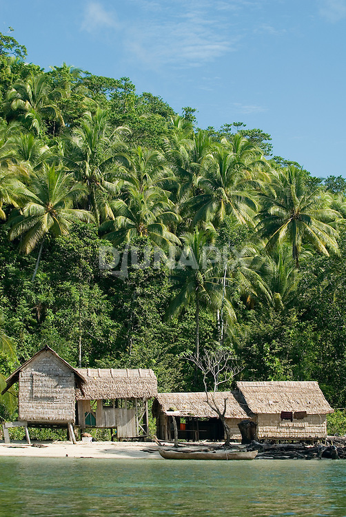"""Stilted palm thatch houses are typical of the rural Solomon Islands. Many people, however, claim they'd prefer to build a """"permanent"""" house with wood planks. Palm thatch must be replaced every 5 to 7 years."""