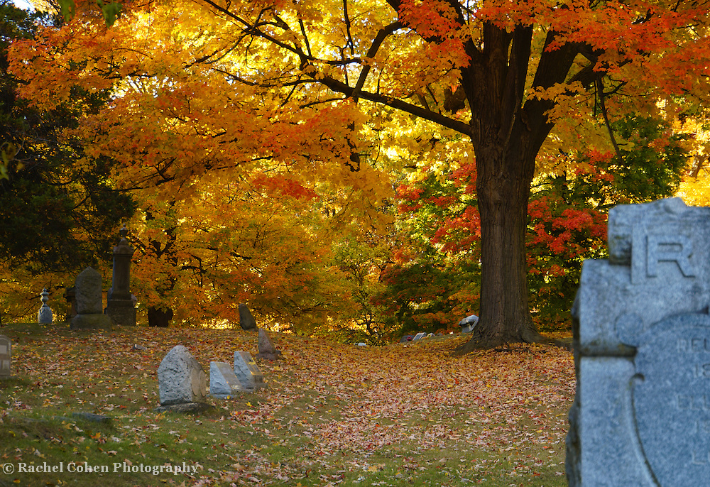 &quot;Colorful Rest&quot; <br />