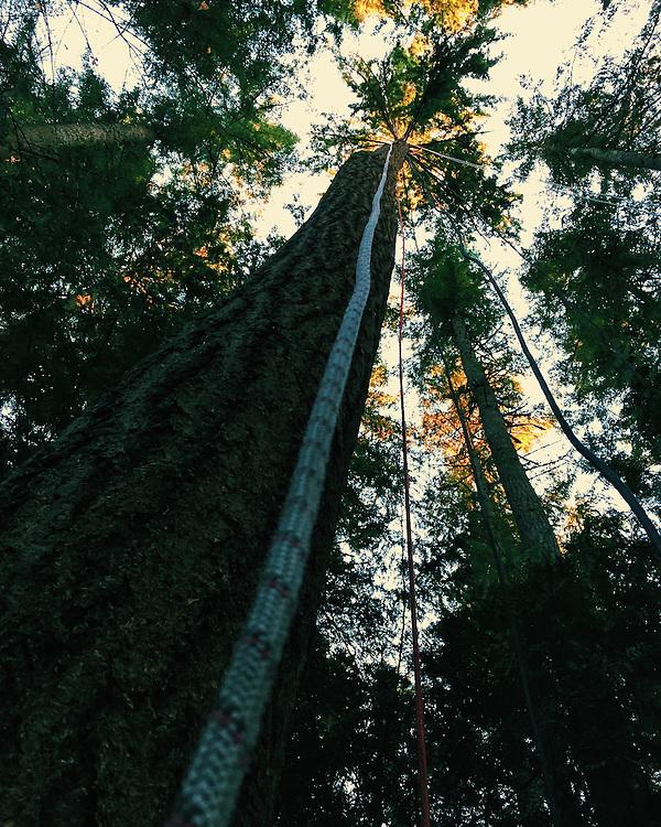 Part of a treetop experience on Bainbridge Island, Washington. Taken with an iPhone