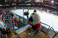 KELOWNA, CANADA - APRIL 7:  Rocky Racoon, the mascot of the Kelowna Rockets has some fun with Ryan Hughes #19 of the Portland Winterhawks as he sits in the penalty box on April 7, 2017 at Prospera Place in Kelowna, British Columbia, Canada.  (Photo by Marissa Baecker/Shoot the Breeze)  *** Local Caption ***