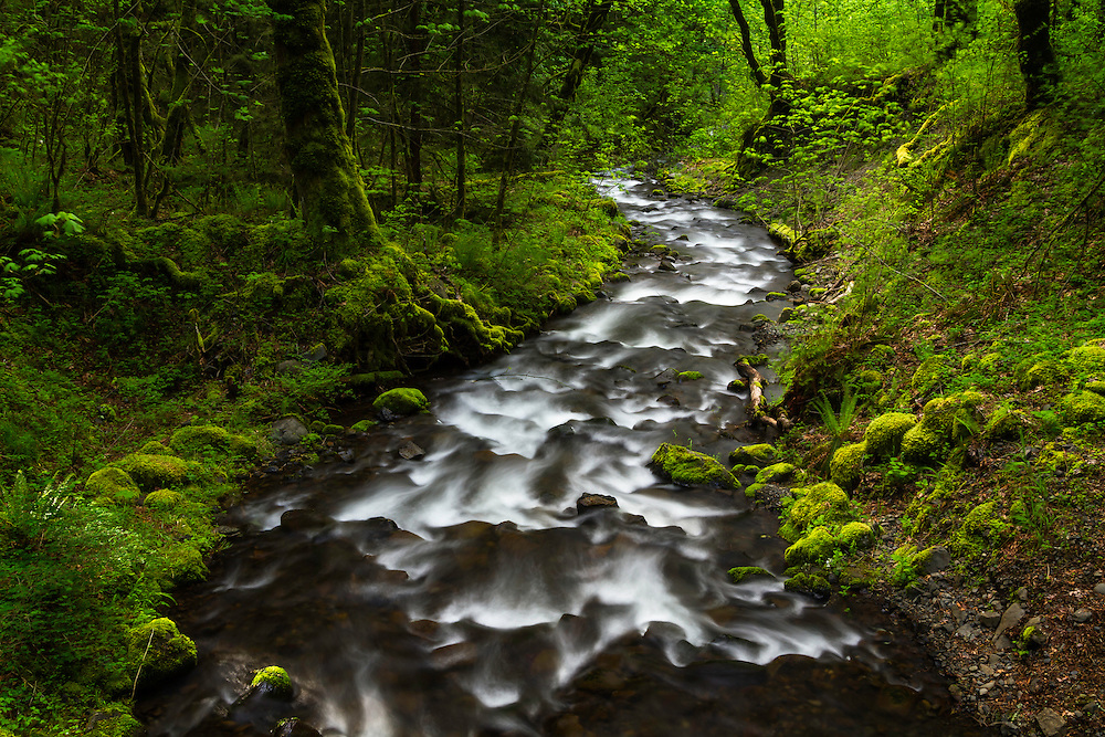 Gorton Creek flows through the mossy forest of the Columbia River Gorge.
