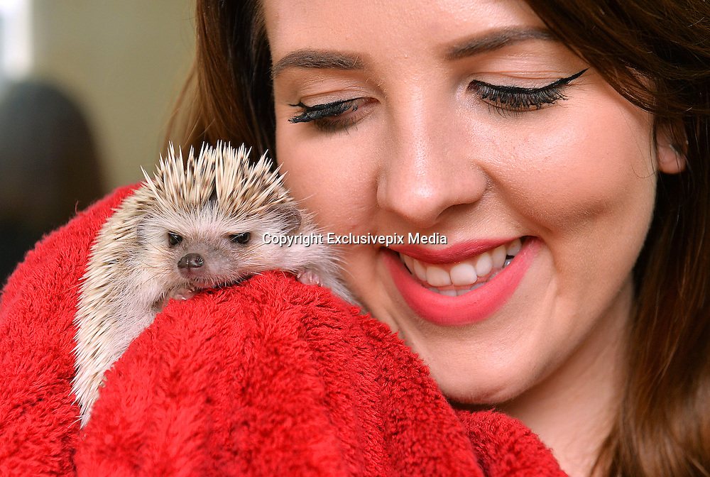 There's a hedgehog in my BATH! The animals are under threat - but not this pampered pet who loves nothing more than a swim <br /> <br /> After a week of prickly news for hedgehogs, at least this adorable little chap looks bristling with joy.<br /> But then Hokey is an African Pygmy hedgehog living the high life in an apartment rather than taking his chances in the wild like Britain's declining one million hedgehogs.<br /> Shockingly, earlier this week a hedgehog was found in student accommodation at Sheffield University, with his spikes cruelly cut off.<br /> <br /> Frankie, as he has been named, is being nursed back to health at an animal sanctuary.<br /> How different things are for Hokey. Col Skinner, 29, a digital marketing consultant, and partner Beki Smith, 24, a social media executive, bought him for £200 from a specialist breeder at eight weeks old.<br /> Now aged nine months, he has settled in to their second- storey flat in Manchester and enjoys the run of the place when the couple get home.<br /> Mr Skinner said: 'We chose him after finding out they make great pets. He loves swimming in the bath then getting wrapped in a flannel. They're natural swimmers.'<br /> <br /> However, an RSPCA spokesman sounded a note of caution: 'African Pygmy hedgehogs have more specialist requirements than more traditional domesticated pets, so it's difficult to meet their needs in a household environment.<br /> 'We would encourage people to consider adopting a more traditional animal (like a cat or dog) from a rehoming centre.'<br /> <br /> Photo shows: Hokey' the nine month old African Pygmy Hedgehog who lives an urban lifestyle in a flat in the centre of Manchester with owners Col Skinner, 28, and Beki Smith,24.<br /> ©Exclusivepix Media