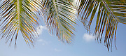 There are many beautiful spots to visit in Barbados along the coast.  From the rugged North Point to calm idealic West Coast and freshness of the South. All have their own natural beauty and must be seen. <br /> COCONUT PALMS &amp; BLUE SKY, BARBADOS