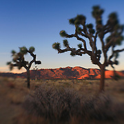Joshua Tree Red Mountains At Dusk - Lensbaby