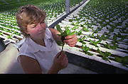 Woman examines plant from hydroponic farm, Williamsport, PA