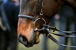 Horse detail on St Patrick's Thursday at Cheltenham Racecourse