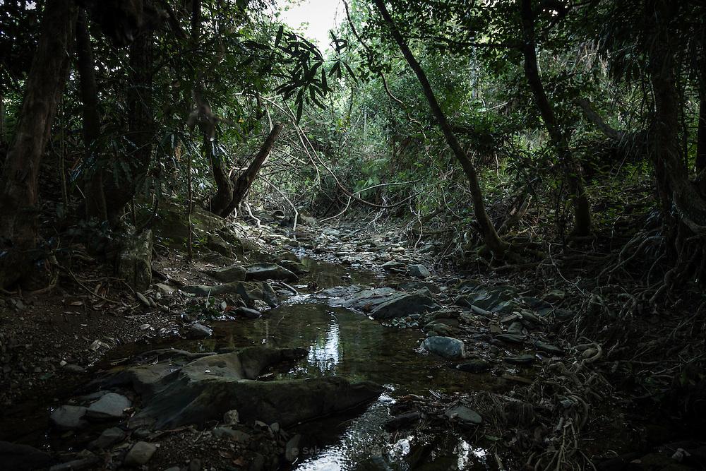 NOUVELLE CALEDONIE, Aout 2013 - Creek dans la region de poindimier