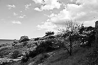 Costa della Marina di Novaglie. Sulla destra è possibile notare un albero di melo selvatico in fiore.
