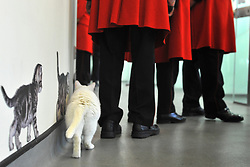 ©London News pictures. 24.02.2011. Chelsea Pensioners meet the cats at Battersea Dogs and Cats Home. Starting in March, the Chelsea Pensioners will become well acquainted with the dogs and cats at the charity at Battersea Dogs and Cats home, when Battersea walks its dogs across the Thames River to spend time at the Royal Hospital. In turn, the charity will invite the veteran British Army soldiers in to interact with the many animals it takes in every year. Picture Credit should read Stephen Simpson/LNP