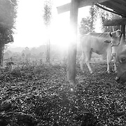 The Farm, Thailand, by Nukul. <br />
