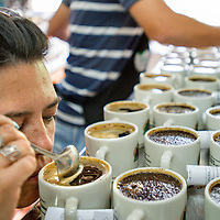 March, 21, 2014 - Quality tasters, Julieta Gonzalez of Catador Nesperesso Cooperativa analyze the taste profiles of the locally produced coffee processed and stored for world-wide shipment at a co-op, Coopertiva de Caficultores de Andes in the town of Jardin in the Department Antioquia region of Colombia.<br /> Story Summary:<br /> Deep in the verdant valleys of Colombia&rsquo;s Department Antioquia region is Fabio Alonso Reyes Cano&rsquo;s coffee finca. Finca La Siemeona has been in Cano&rsquo;s family for generations. <br /> He and two workers farm the 5-acres of land as his ancestors did, bean by bean.  It is a tradition that has dwindled amid modern day farming techniques that harvest quicker but the selectively picked ripe deep red cherries are picked individually by hand for the best quality. &lsquo;Grain by grain&rsquo; processing allows for greater control over that quality of one of Colombia&rsquo;s top exports.  It also may help save an industry that is seeing firsthand the effects of climate change.<br /> Cano takes pride in the organic process, which he practices out of respect for nature and the land he was born and raised on.  A businessman, Cano keeps his eyes on way to grow but he also takes seriously his role as steward, encouraging biodiversity and employing natural pest control on the finca.  His practices are at odds with other coffee farmers, who have adopted more industrialized techniques. <br /> Climate change threatens a way of life that supports about 92,000 families nationwide and serves as one of Colombia&rsquo;s economic backbones.  Colombian coffee production has declined in recent years due to regional climate change associated with global warming as both the average temperatures have risen and an increase in rainfall.  The trend disrupts the specific climate requirements to grow the Coffea Arabica bean, and a way of life.  (Credit Image: &copy; Eric Reed/ZUMAPRESS.com)