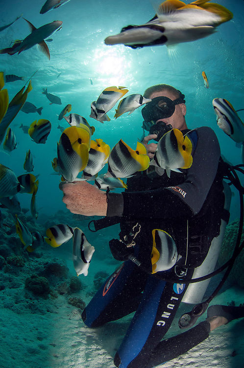 A scuba diver is surrounded by Butterflyfish of several species in the lagoon near Tiputa Pass, Rangiroa Atoll, French Polynesia