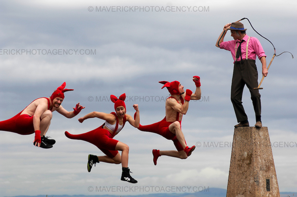 Circus OZ's iconic red kangaroos perform acrobatic feats on top of Edinburgh's Carlton Hill during the Edinburgh Festival Fringe.  These urban bounding beasts take part in the show which features a spectacular team of acrobats, aerialists and musicians with some added cheeky Australian humour.